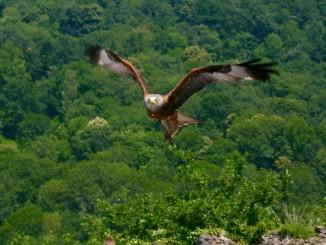 Àliga a Donjon des Aigles © Petits Viatgers