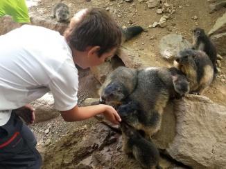 Donant de menjar a les marmotes a Molló Parc - Foto: YouMeKids