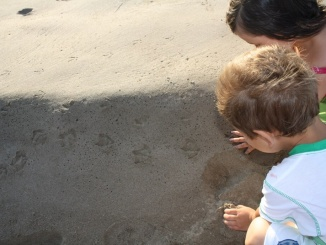 Seguint el rastre dels ocells a la Punta de la Banya - foto. YouMeKids