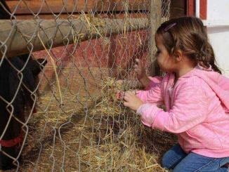 Donant de menjar als cavalls a Granja Aventura Park - foto: YouMeKids