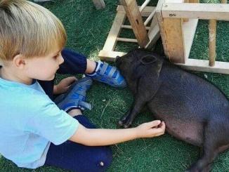 A l'escoleta Petits Voladors (El Vendrell) els nens estan en contacte diari amb els animals - Foto: Petits Voladors