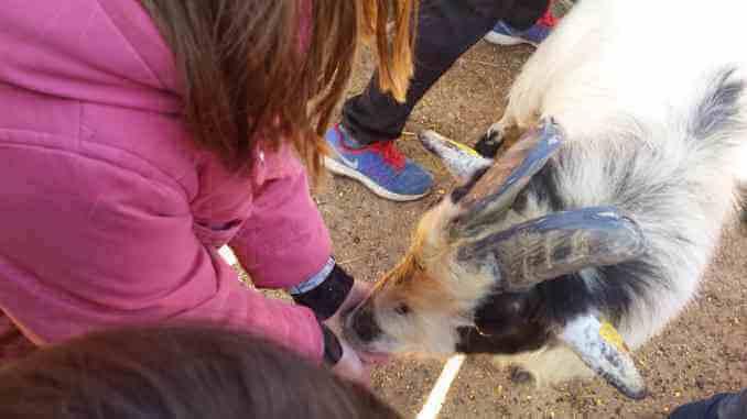 Les cabres mengen de la nostra mà - Foto: Montserrat López