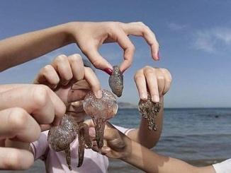 Picades de meduses a la platja