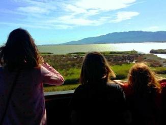 Mirador de la llacuna de l'Encanyissada - Foto: Marede3