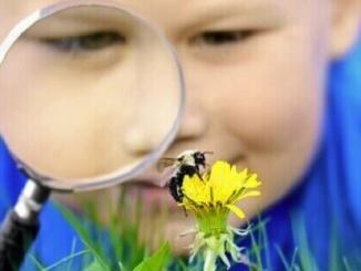 nen abella