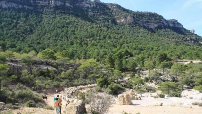 Voltants de l'ermita de Santa Margdalena - Foto: YouMeKids