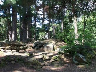 àrea de pícnic el Pins Sant Privat en bas